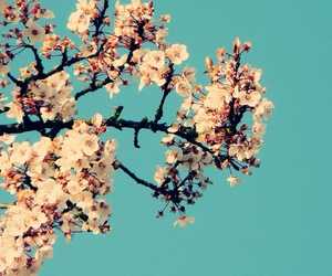 flowers, blue, and tree image