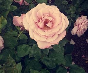 beautiful, flower, and grunge image