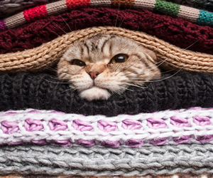 animal, blankets, and cat image