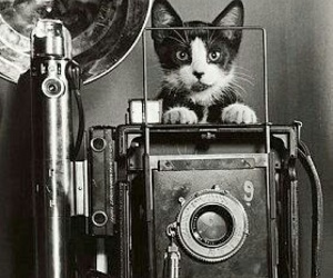 cat, black and white, and camera image