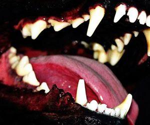 dog, teeth, and wolf image