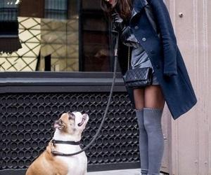 black, chanel, and dog image