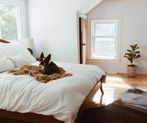 dog, home, and bedroom image