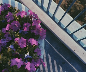 bars, blue, and flowers image