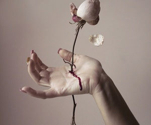 rose, blood, and flowers image