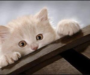 cat, cute animals, and kitten image