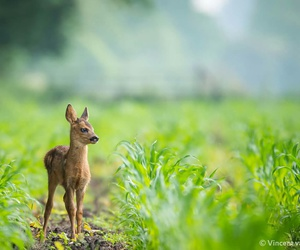alone, animal, and deer image