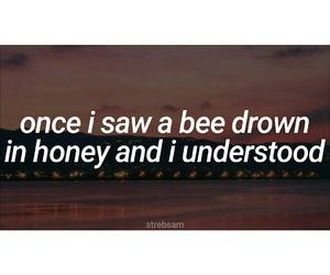 bee, honey, and humanity image