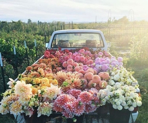 car, fields, and flowers image