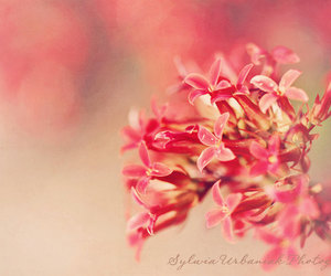 digital photography, ethereal, and etsy image