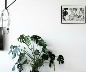 decoration, plants, and home image