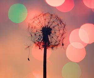 bokeh, color, and dandelion image
