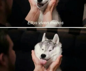 dog, animal, and funny image