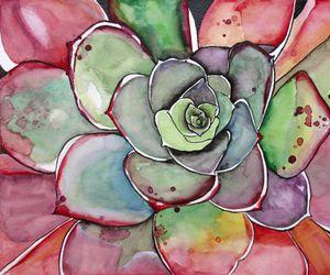 succulents image