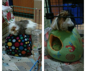 brothers, gorditos, and guinea pigs image