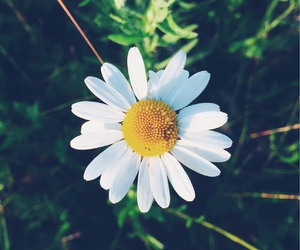 flower, grass, and shoot image