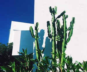 cactus, quotes, and portugal image