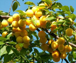 aesthetic, fruit, and yellow image