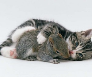 cat, animals, and cute animals image