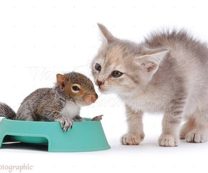 baby animals, cats, and animal friends image
