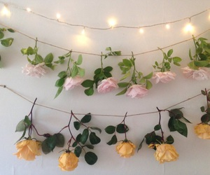 flowers, light, and rose image