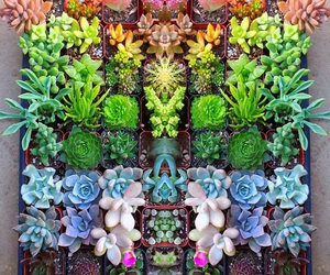 plants, succulents, and colorful image
