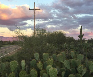 cactus and aesthetic image