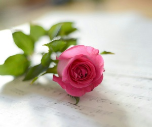flowers, pink rose, and rose image