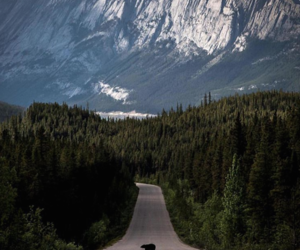 bear, forest, and mountains image
