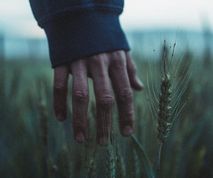 grass and hand image
