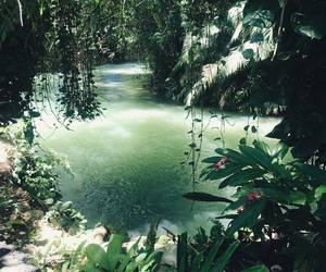 green, jungle, and paradise image