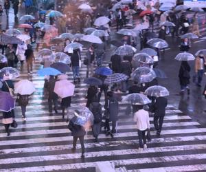 rain, purple, and umbrella image
