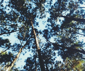 buenosaires, sky, and woods image