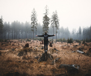 forest and travel image