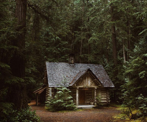 home, cabin, and woods image