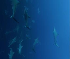 Animais, tubarão branco, and animal image