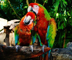 birds, parrot, and pretty image
