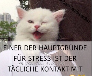 cat, deutsch, and facebook image