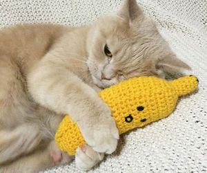 cat, animal, and banana image
