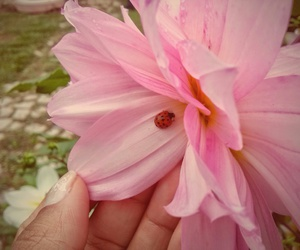 belo, flor, and joaninha image