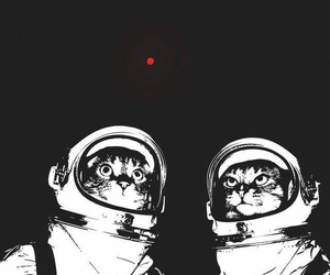 cat, wallpaper, and space image