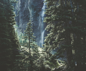 forest and paisaje image