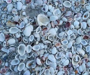 shell, beach, and ocean image