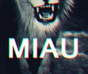 lion, miau, and rawr image