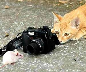 cat, mouse, and camera image