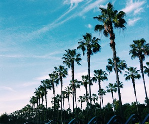 palmtrees, mypicture, and goodvibes image