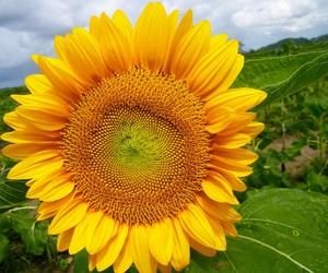 amarillo, amazing, and beautifull image