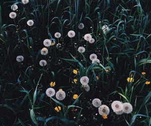 flowers, nature, and wow image