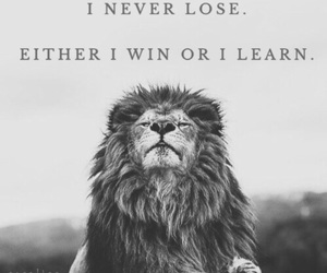 black'n'white, learn, and lion image