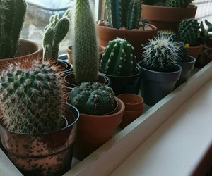 cactus, green, and hipster image